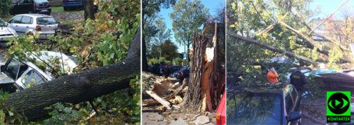 Zniszczone samochody, powalone drzewa i ranni
