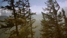 Halny na filmie Tatrzańskiego Parku Narodowego. Wiatr wyrywał drzewa z korzeniami